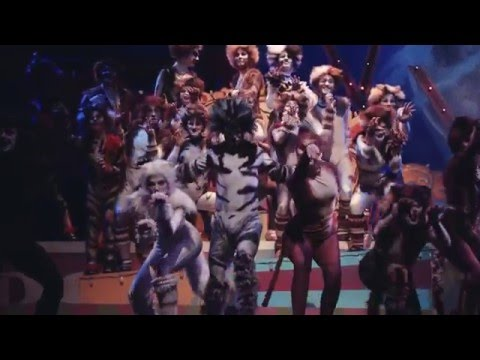 CATS the Musical at CCT