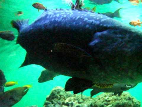 葛西臨海水族園の大きなお魚さんたち