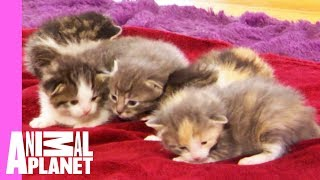 Five Orphaned Kittens Arrive At Their New Foster Home   Too Cute!