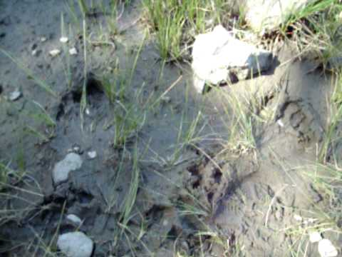 bigfoot lassen county