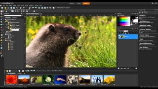 Watermarking Photos With PaintShop Pro X5