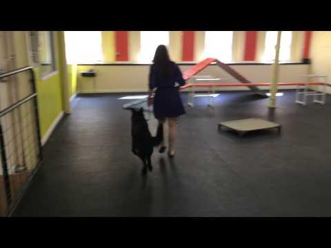 Fearful Dog rehab How To Dog Training