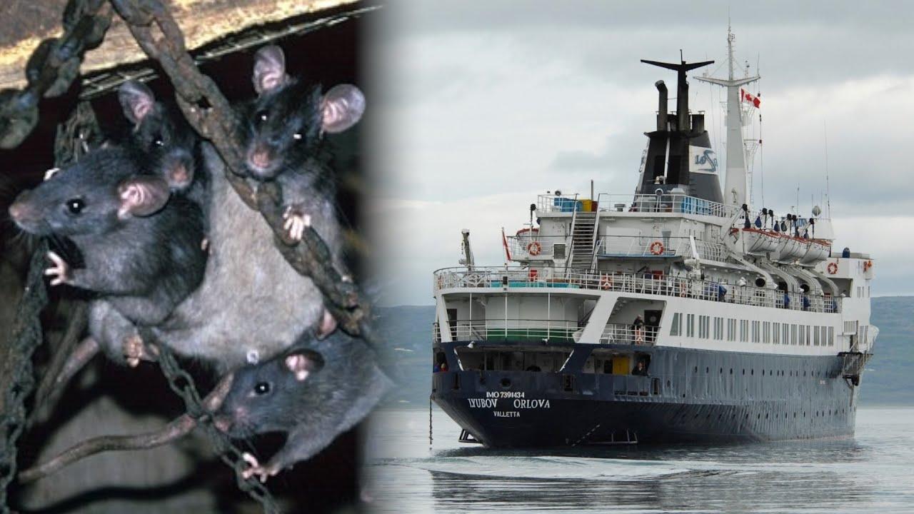 Ghost Rat Ship