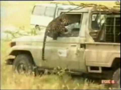 Video- Báo tấn công người - Phi thường - kỳ quặc - Video kỳ quặc.flv