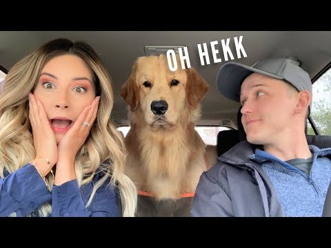 My Dog Reacts to Car Wash