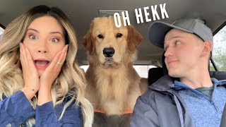 Download My Dog Reacts to Car Wash Mp3 and Videos