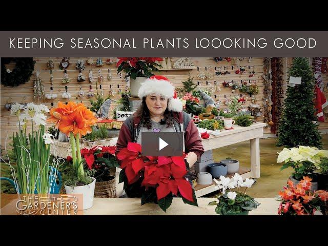 12/12/2020 Keeping Seasonal Plants Looking Good with Joy