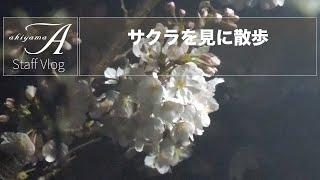 [Staff Vlog] サクラを見に散歩