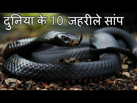 दुनिया के 10 सबसे जहरीले सांप Top 10 Most Venomous Snakes in the World