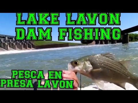 Lake Lavon Dam White Bass Fishing Pesca De White Bass