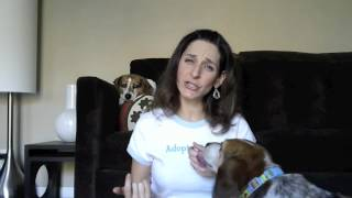 How To Teach Your Dog To Stop Mouthing!