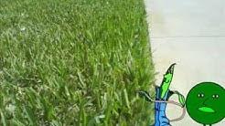 Pro Lawn Plus Jacksonville FL