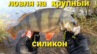 Ловля Крупных Окуней Рыбалка на спиннинг