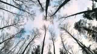 enya the memory of trees