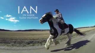 Irish cob horse galloping in super slow motion - Ian the horse filmed with GoPro Hero3 camera