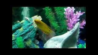 a journey through my 36 gallon bowfront aquarium