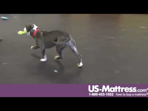 Michigan Humane Society - Lanaki the Pitbull Puppy is waiting for a new home