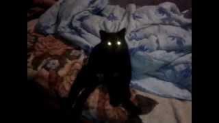 The cat is sitting in shock (Кошка сидит в шоке)