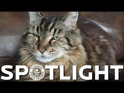 Corduroy is crowned the oldest living cat - Spotlight