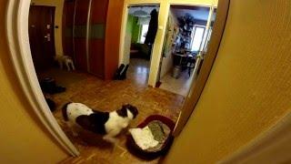 Focus i Lassie pierwszy raz same w domu