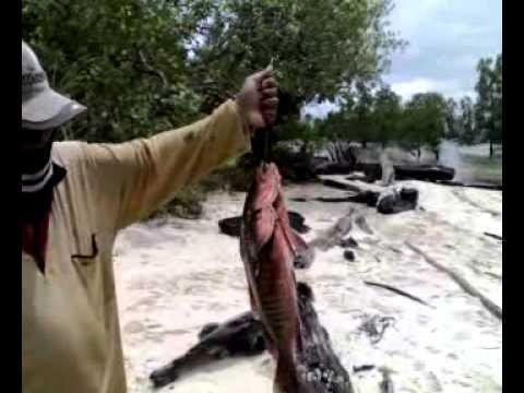 Mancing Mania Bunyu,swamp lake