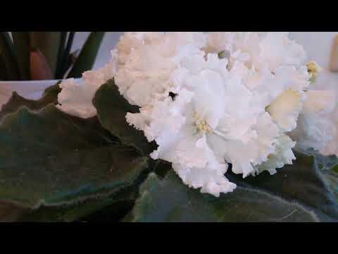 Цветение моей фиалки Букет невесты