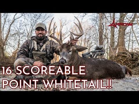 16 Scoreable Point Buck!! I MISSOURI-BOW-RIDE I Red Arrow I Full Episode