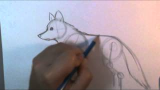 How to draw a wolf body(Learn step by step instructions to draw a basic wolf body Free Music by Dan-O at DanoSongs.com., 2012-10-08T01:56:05.000Z)