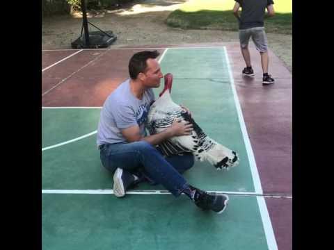 Dog Gets Jealous Over Turkey Hugging Man