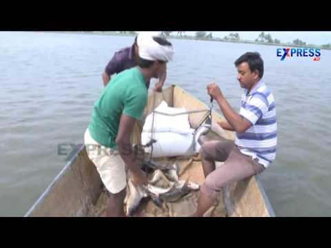 Good oppertunities for Aquaculture in Andhra Pradesh || Paadi Pantalu - Express TV