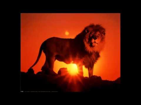 Le lion est mort ce soir