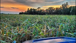 Predicting Our Worst Harvest Ever! Another Wind Storm