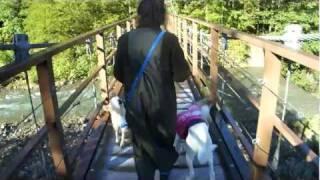 平湯大滝公園・吊橋