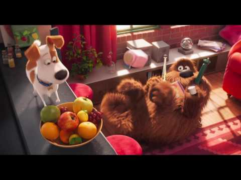 The Secret Life of Pets MOVIE CLIPS (1-5)