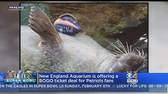 New England Aquarium Giving Weekend Ticket Discount For Patriots Fans