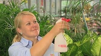 Coop Bau+Hobby Tutorial: Grünpflanzen richtig pflegen