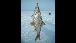 Ловля очень крупной плотвы! Смотреть всем! Рыбалка в Казахстане