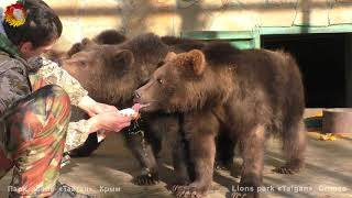 Чудо! Кипер Витя и три медведя! Архив. Тайган. Keeper Victor and three bears! Taigan.