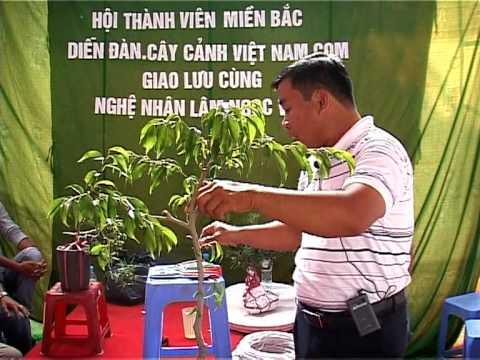 Video nghệ nhân Lâm Ngọc Vinh trình bày kỹ thuât tạo hình Bonsai phần 1