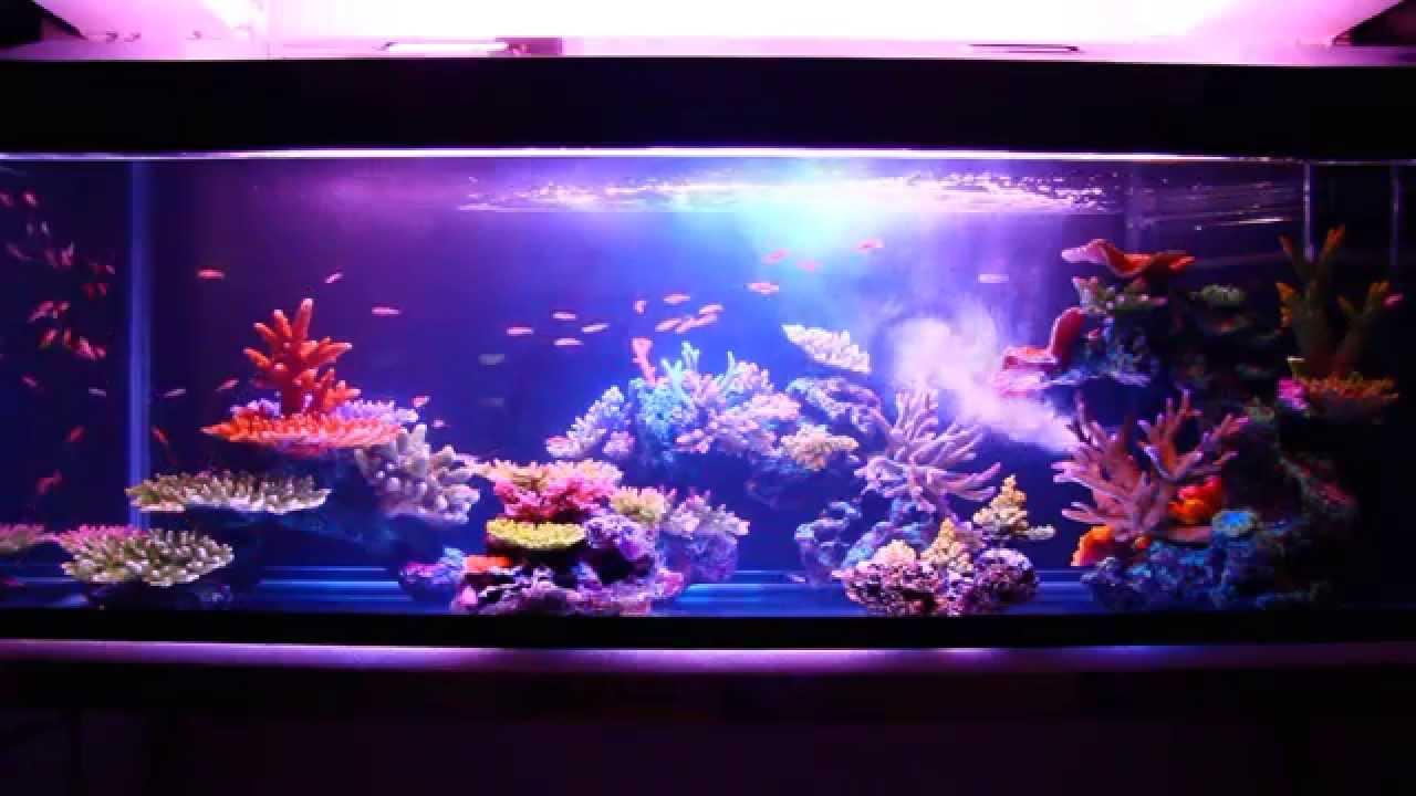 Artificial Coral Reef Aquarium Youtube