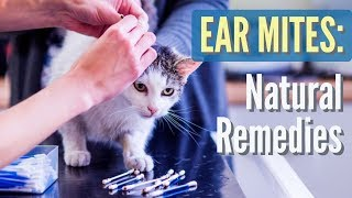Ear Mites in Cats and Dogs: Natural Solutions