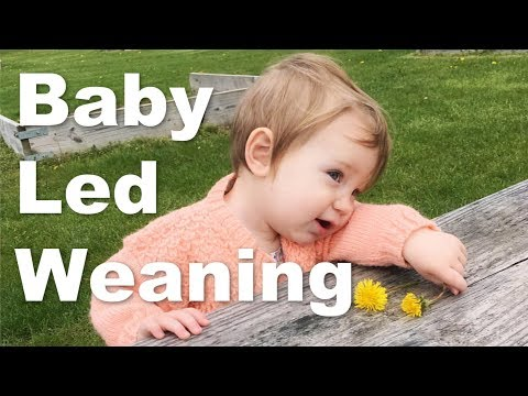 Baby Led Weaning: When Is It A Mistake?
