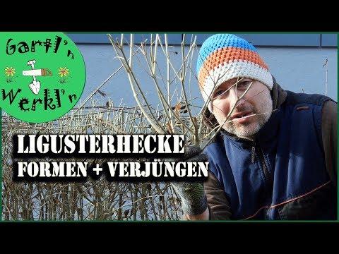 Lieblings Ligusterhecke im März schneiden - Formen Verjüngen 2018er Look #VG_81