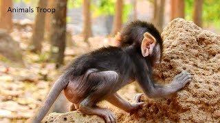 All Newborn monkey try to climb small hill, All Newborn monkey try to climb small mountain