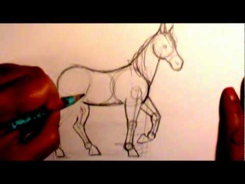 How to draw a horse body (contest is closed)