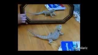 Что делают животные, когда видят своё отражение