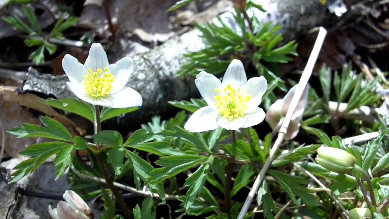 Blommande kantzoner 2016-10-02