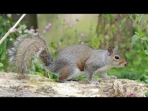 Brazoria County, TX Squirrel Removal Company - (713) 396-6030