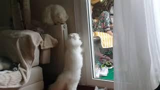 Ты должен это увидеть кот рвётся на свободу)