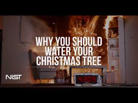 Christmas Tree Fire: Watered Tree vs. Dry Tree